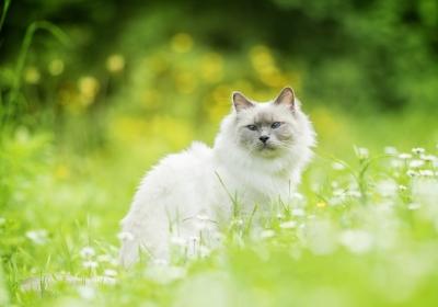 猫,草,散景,白猫4K壁纸