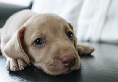 狗在沙发上,可爱小狗5k图片